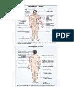 cuerpo humano partes.docx