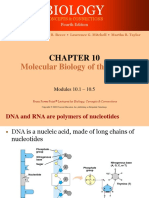 DNA Structure Replication