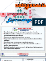 (4)a Espermatogenesis. Arteaga m. Modif.-1