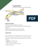 Reanimacion recién nacido.pdf