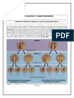 Guia Contenidos Aneuploidías y Gametogenesis