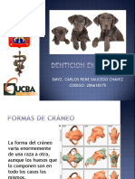 Anatomia Dental Perros