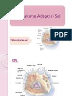 Mekanisme Adaptasi Sel