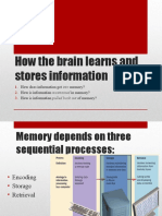 how the brain learns and study tips