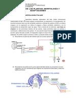 9_morfologia_hoja.pdf
