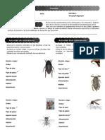 19 Insectos