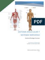Sistema Muscular y Sistema Nervioso