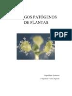 Hongos Patogenos de Plantas
