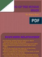 Working Brain