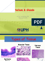 EPITHELIUM AND GLANDS dr jan 2014 BB.pdf