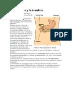 El Páncreas y La Insulina
