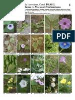 Convolvulaceae Do Maciço de Uruburetama - 2018