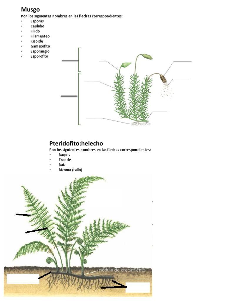 Anatomia Plantas 1 º eso ejercicios