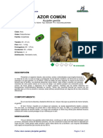 Ficha AZOR COMÚN _Accipiter Gentilis