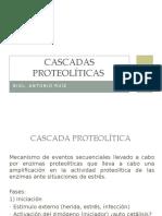 Cascadas proteolíticas