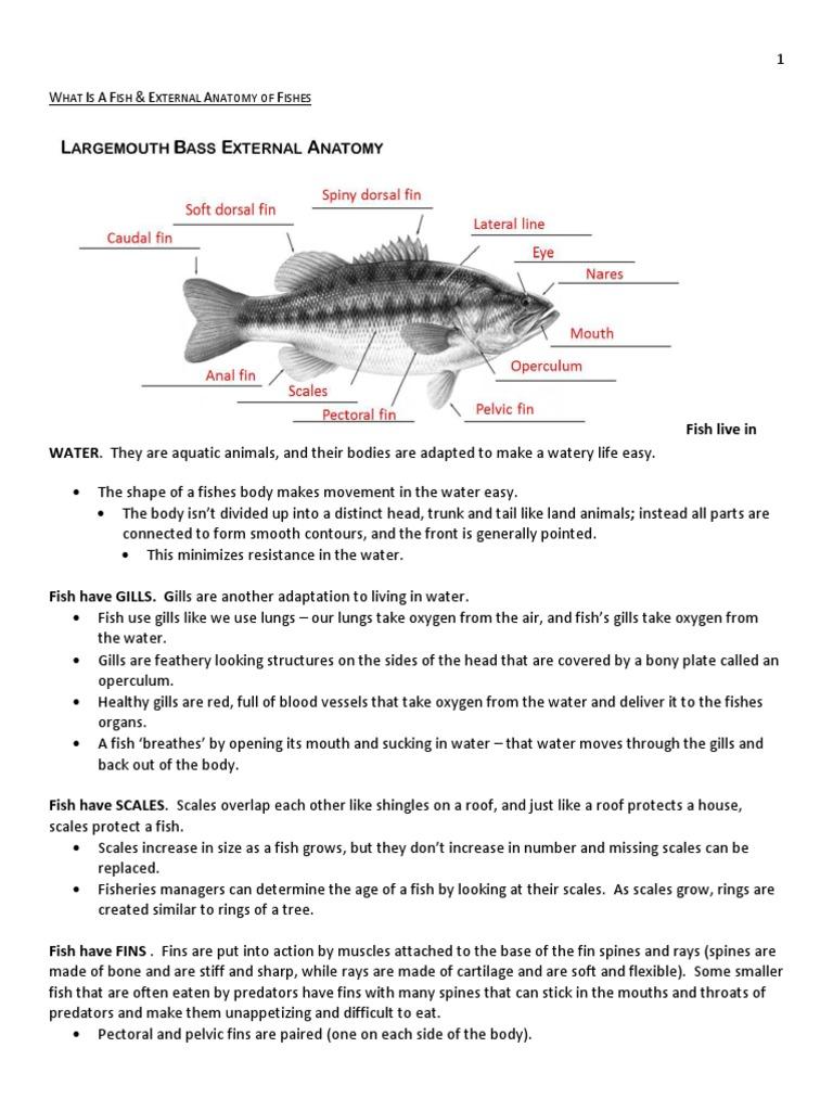 What Makes a Fish and Fish Anatomy | Gill | Fish
