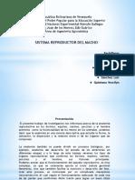 ANATOMIA DIAPOSITIVAS.pptx