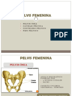 Pelvis Femenina (1)