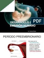 Desarrollo Del Embrion Humano