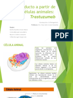 células aimales trastuzumab