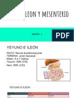 Yeyuno, Ileon y Mesenterio