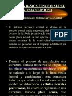 Anatomía Básica y Funcional