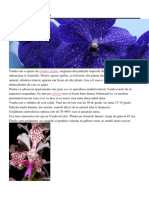 Specii Plante