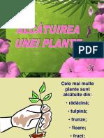 Alc.uneiplante