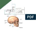 tulang tenggorak