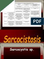 Sarcocistis ERM Mayo 2017