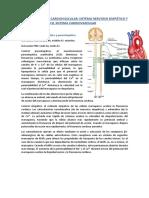 Circulatorio Anexo.pdf