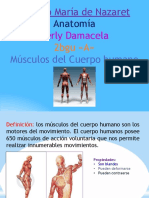 musculos-140601165823-phpapp02