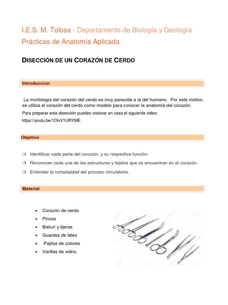 Practica 5.- Diseccion Corazon
