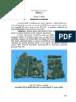 ridichea.pdf