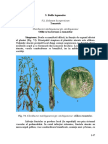 tomatele.pdf