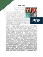 REINO FUNGÍ.docx