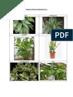 Plantas Con Alto Consumo de Co2