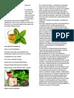 5 Beneficios de La Hierbabuena y Cómo Hacer La Infusión