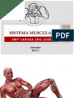 O Sistema Muscular - Completo