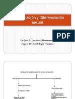 Diferenciación Sexual-dr. Gutierrez