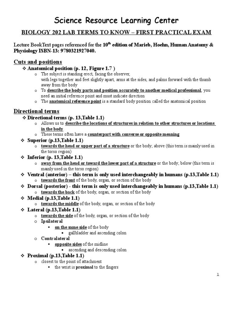 Bio 202 Lab Terms To Know Practical Exam 1 Skin Epithelium