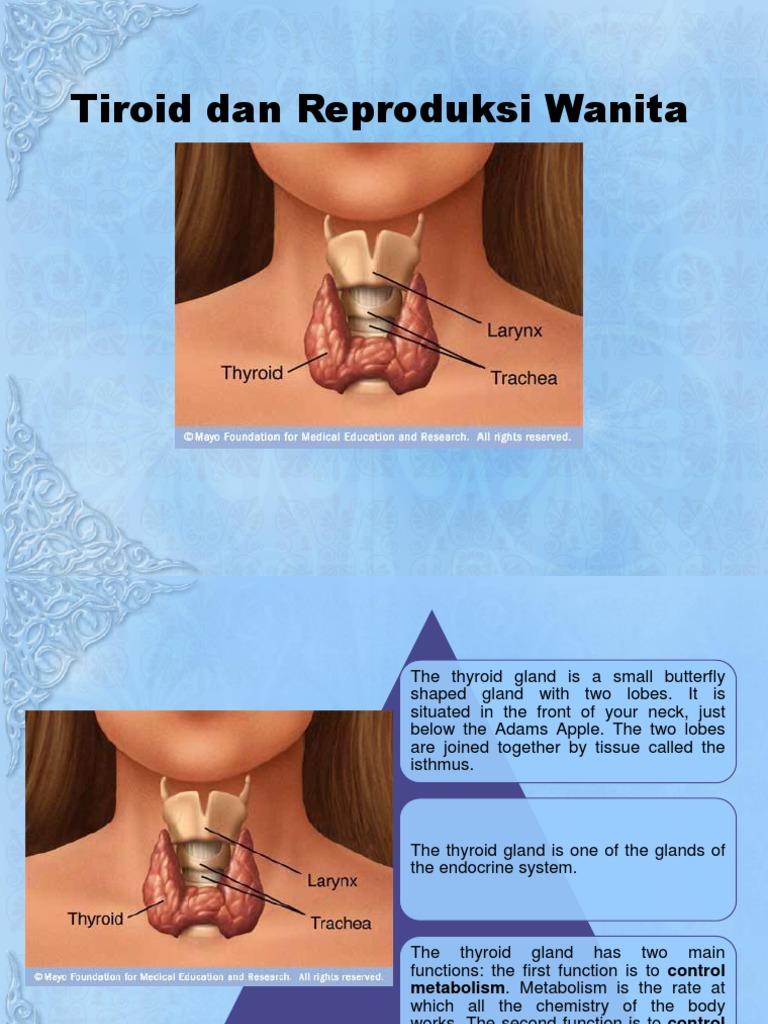 Tiroid Dan Reproduksi Wanita Hyperthyroidism Thyroid