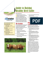 Guide to Raising Healthy Beef Cattle
