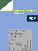 8.Técnicas Básicas en Biología Molecular
