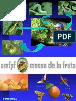 Mip - Mosca de La Fruta