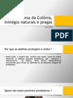 07 Defesa Da Colônia, Inimigos Naturais e Pragas