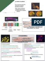Citogenetica Aplicada