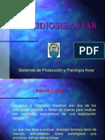 Clase de Coccidiosis 2.ppt