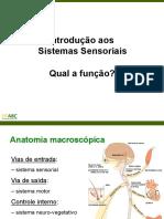 Sistemas sensoriais - Neuro