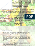 Practica Cacao ppp
